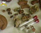 Miocén kori leletek a Mecsekben 2. (Kanizsai László)