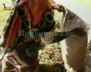 Tafedim, Afrika kamillája