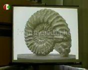 Természettudományi gyűjtemény bemutatása