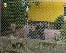 Zavaró kutyaugatás - lakossági panasz