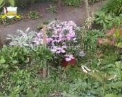 Virágok közterületen saját erőből (Feuerstaller Mátyásné)