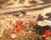 Andezit és homok - kiállítás