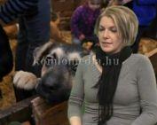 Oktatásokat tartanak az állatvédők (Róna Ágnes)