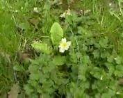 Tavasz - etűd