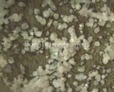 Egy komlói ásványanyag gyűjtő kincseiről... (Zsálig Ákos)