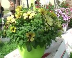 Idén 3 alkalommal tartanak virágvásárt (Szarka Elemér, Fóris Zoltán)