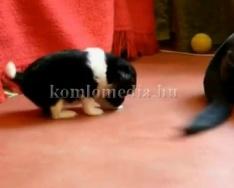 Körtvélyesben is aktívak az állatvédők (Gyánti Nóra)