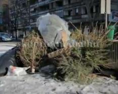 A felesleges karácsonyfák elszállításáról (Szeitz Gábor)