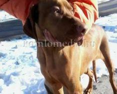 A kutyafuttatókról és a felelős állattartásról (Gyánti Nóra)