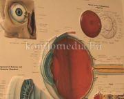 Egészségpercek - A lencsetípusok és a látásvizsgálatok (Dr. Váczi Ilona)