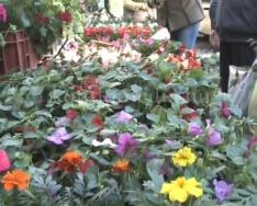 Közintézmények is virágosak a Komlói Honismereti-és Városszépítő Egyesület jóvoltából