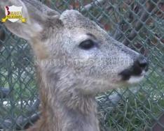 Hamarosan 2 éves a komlói Mini Zoo (Faragó Endre)