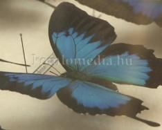 Trópusi lepkék és rovargigászok címmel nyílt kiállítás a múzeumban (Henn Tamás)
