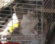 Ne vásároljunk, fogadjunk örökbe cicákat a Komlói Állatvédőktől