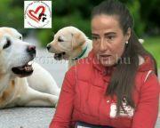 Bemutatjuk a Kis Mancsok Nagy Szívek Állatvédő Egyesületet