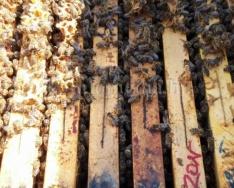 A méhek a Föld egyik leghasznosabb élőlényei (Bohuny Tibor)
