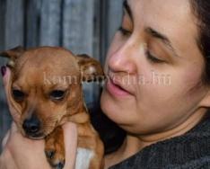 Élet egy állatvédő egyesületben - Ideiglenes befogadó (Lukács Anita)