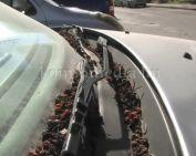 Több használaton kívüli autó parkol szilvásban (Ratkó Lajos)